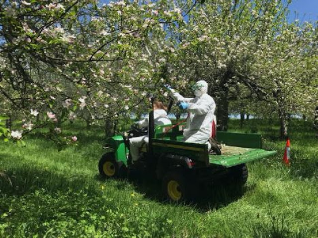 Floral Probiotics reduce apple disease