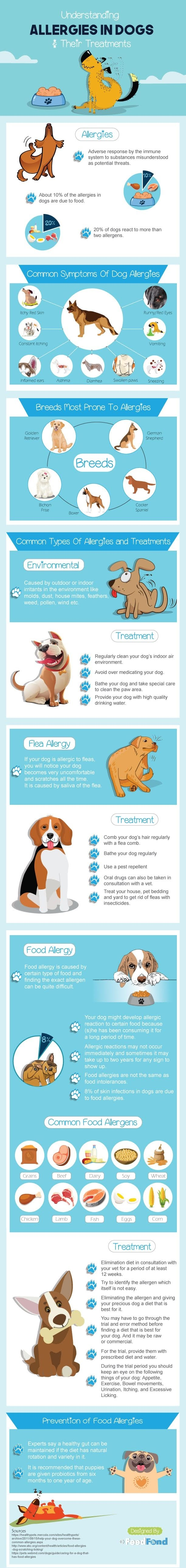 Understanding Allergies In Dogs And Their Treatments