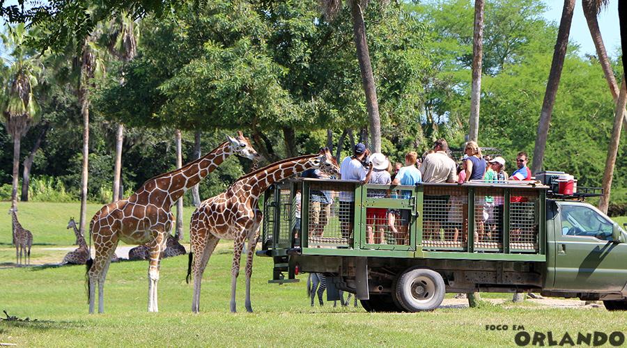 Serengeti Safari Tour, Busch Gardens Tampa, Tampa Bay