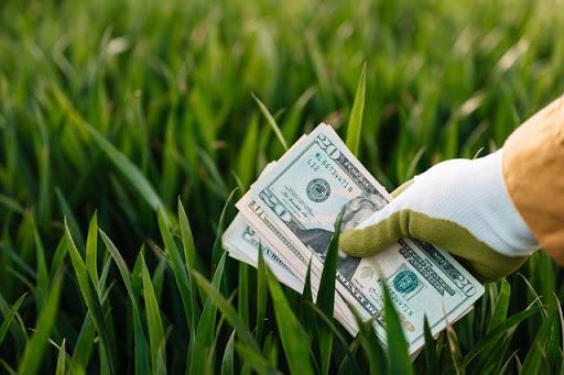 Money-mistakes-money-grass