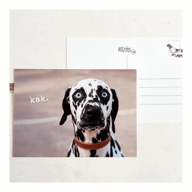 Beterschap kaarten hond   Notzohot webshop