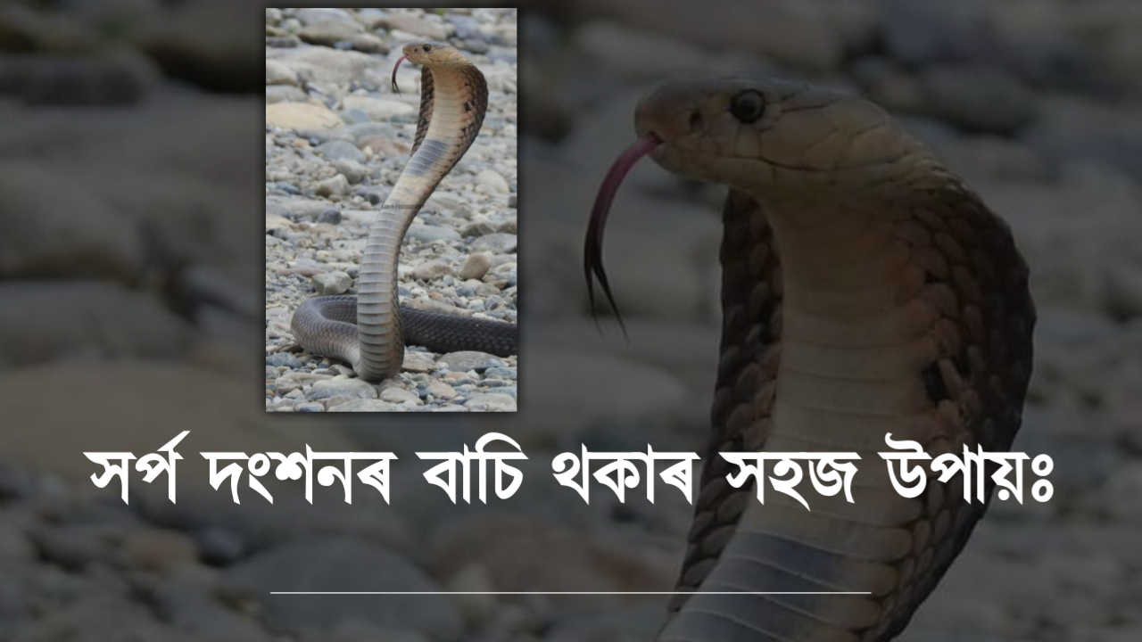 The easiest way to avoid snake bites in Assamese