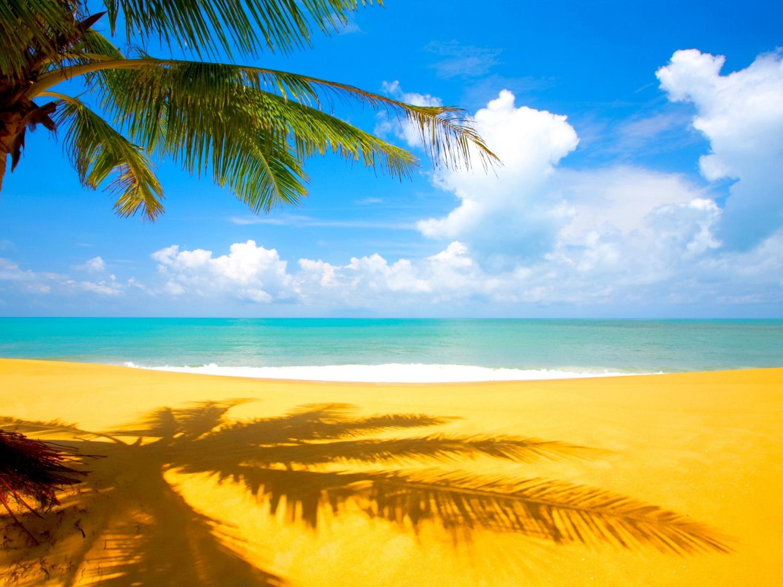 Wallpapernarium Bella Vista De La Playa A La Sombra De Una Palmera