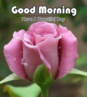 New Good Morning 4k Full HD Images Download For Daily%2B107