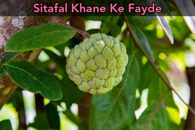 Sitafal Khane Ke Fayde in Hindi   Custard Apple Benefits in Hindi
