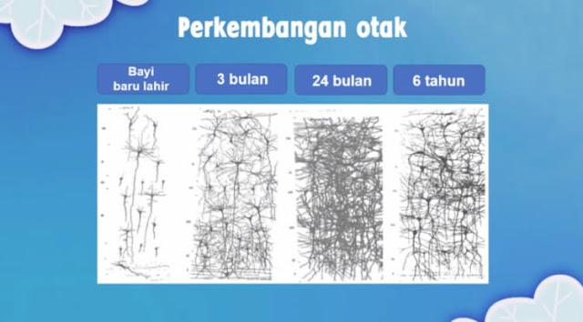 perkembangan otak anak hingga usia 2 tahun