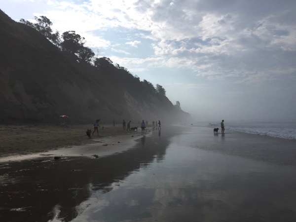 Misty summer morning Hendry's Beach