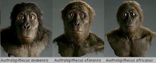 Resultado de imagen para Los Australopithecus