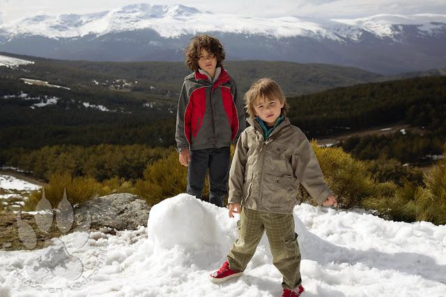 Espagne-Sierra-Guadarrama-louveteaux-neige