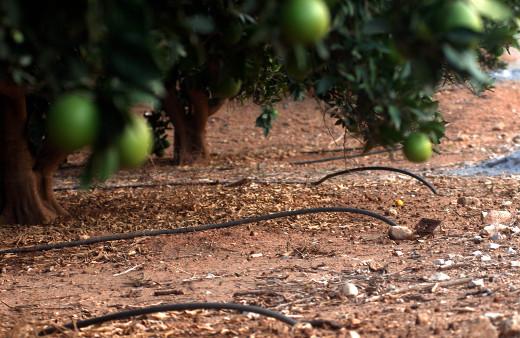 Agricultura actualiza los criterios de las ayudas a regantes para impulsar la eficiencia energética en los sistemas de riego