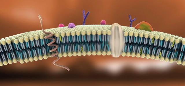 Membrana celular y biologia
