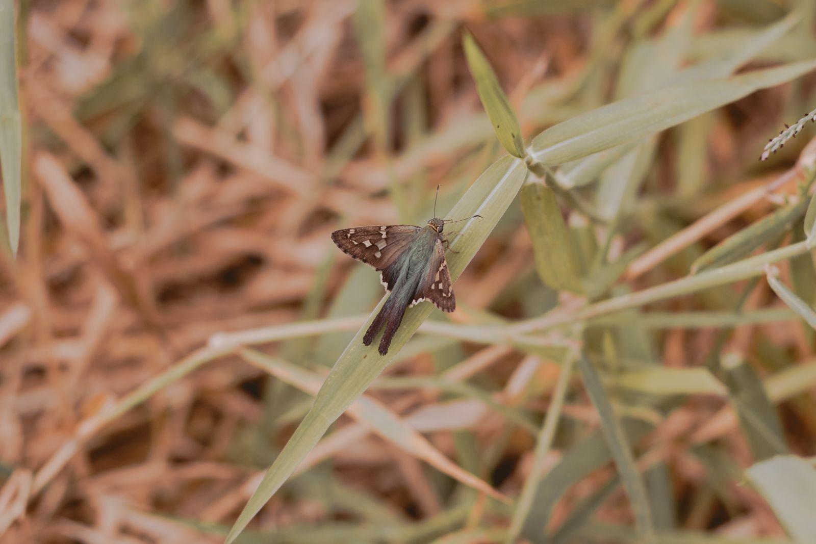 inseto parado na grama