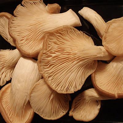 Mushroom Supplier Company in Rajahmundry