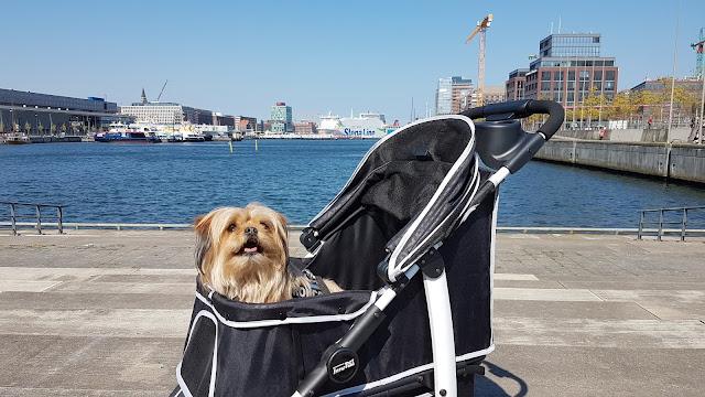 Bronco in Kiel im InnoPet Monaco Hundewagen