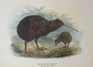 Kiwi art print by Sir Walter Lawry Buller