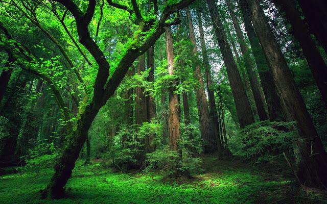 5 Ways to survive in the rainforest