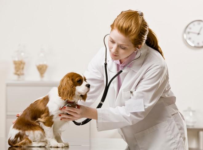 cần xét nghiệm sán cún mỗi năm một lần