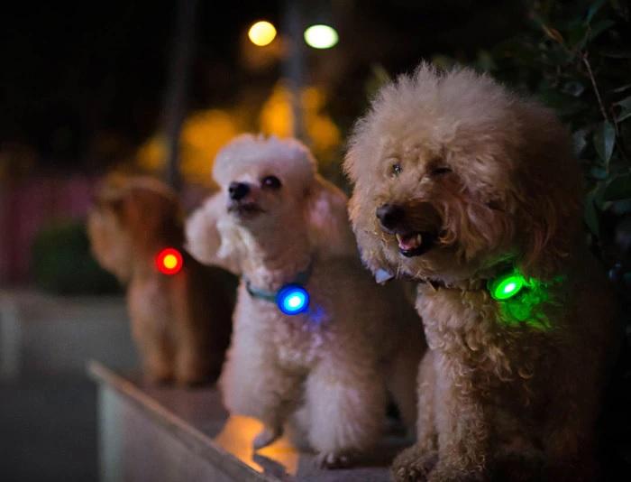 Xiaomi Dog tracker mede actividade dos cães