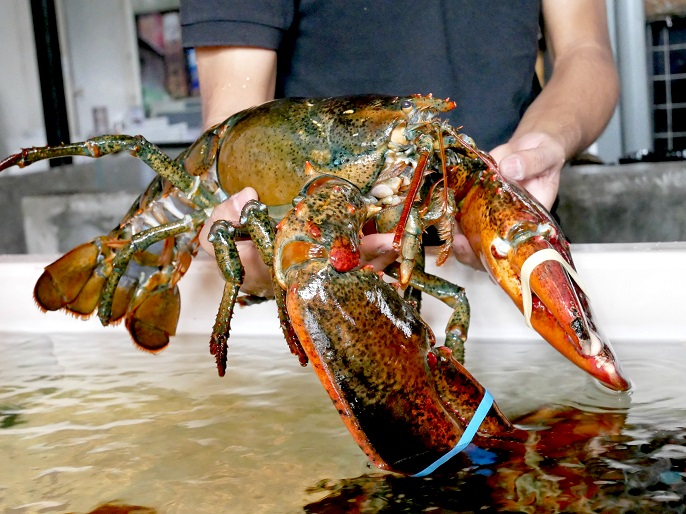 Buy 2 Free 1 Promotion Live Lobster @ Caffeinees - hiphippopo com