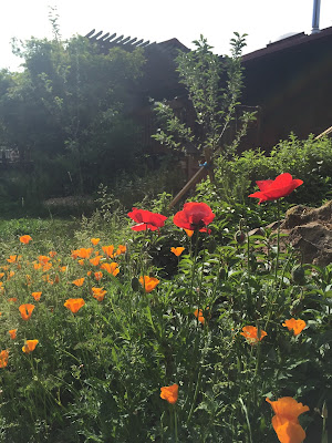 Image of a mixed wildflower garden bed.