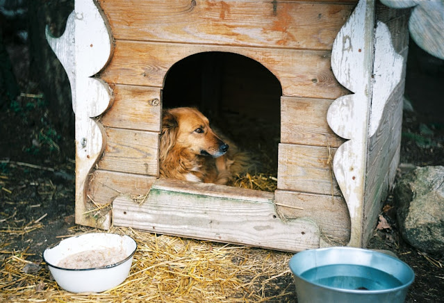 Super Useful Tips To Improve Animal House