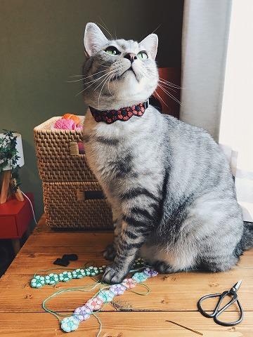 かぎ針編みの首輪をつけたサバトラ猫