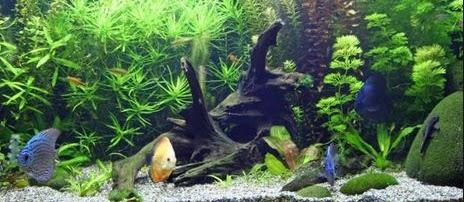 Apakah Ikan di Aquarium Bisa Besar? Berikut Jawabannya