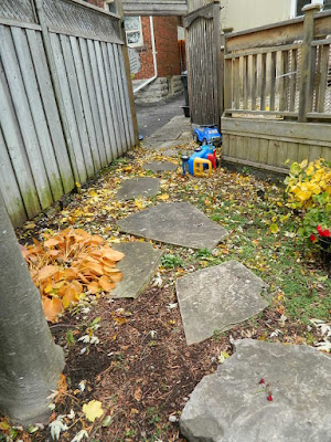 Toronto Fall Cleanup Before in Bedford Park by Paul Jung Gardening Services--a Toronto Gardening Company
