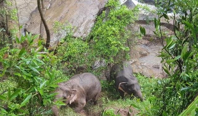 5 ελέφαντες πέθαναν προσπαθώντας με αυταπάρνηση να σώσουν ο ένας τον άλλο