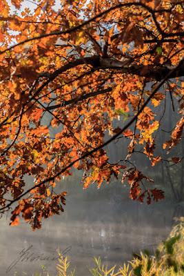 Sulejówek Glinianki jesień
