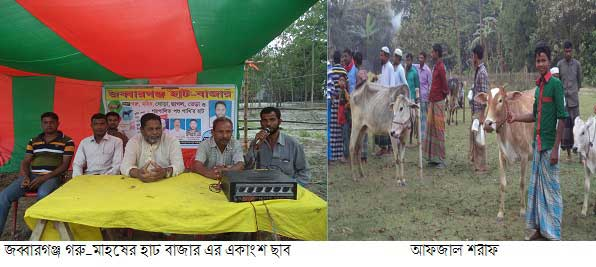 Heavy cows of buffalo hat in Jabbarganj