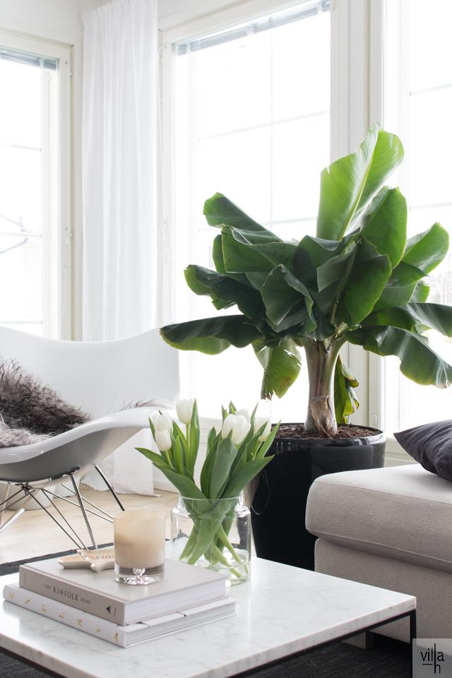 interior, banaanipuu, musa, sisustus, olohuone