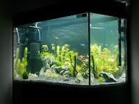 Bernilai Jutaan Rupiah, Yuk Intip 3 Cara Mudah Memulai Bisnis Aquascape
