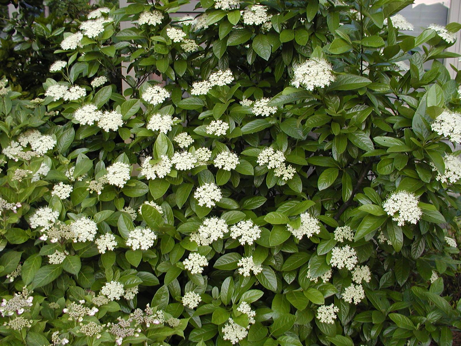 Gene's Garden: Perfect Spring Weather