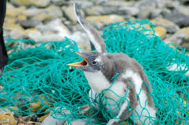 Plastic pollution all over the world......
