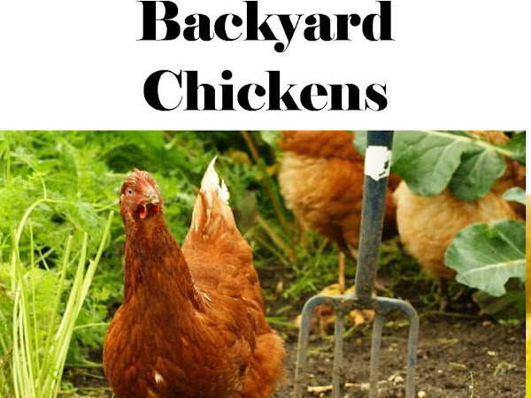 4 Things I Wish I'd Known about Backyard Chickens
