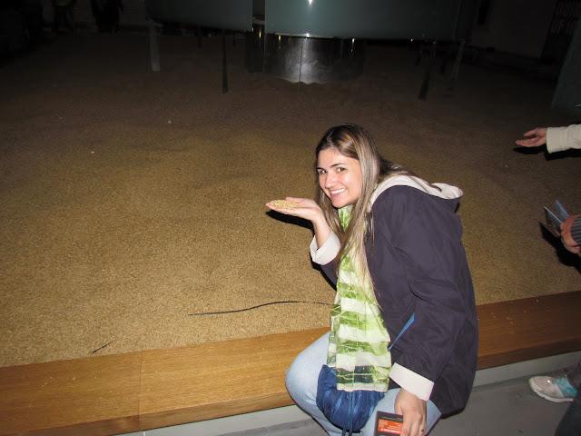 Visita à cervejaria Guinness - sala dos Maltes.
