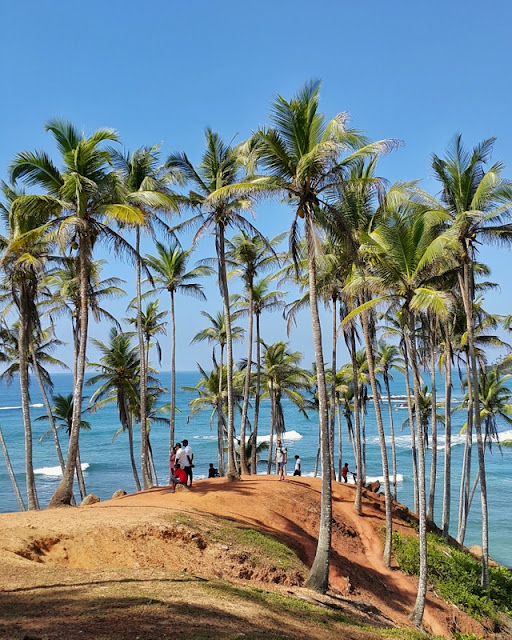 Coconut Tree Hill
