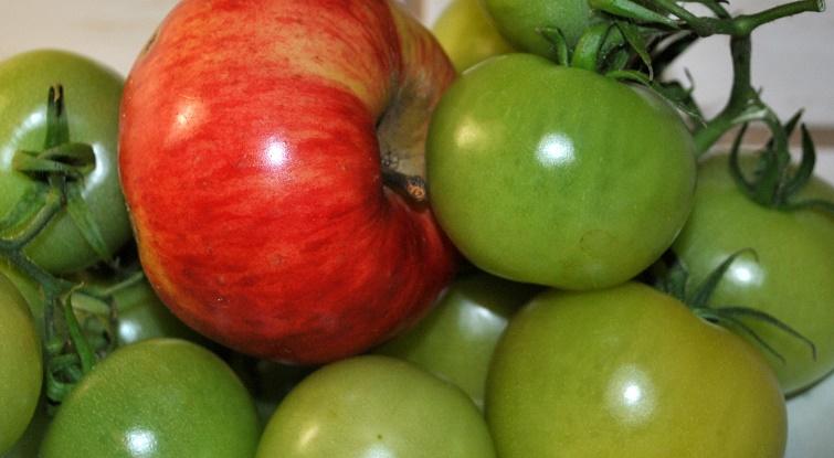 Grüne Tomaten mit Apfel nachreifen lassen