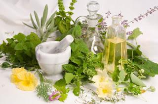 Plantas y hierbas medicinales para adelgazar