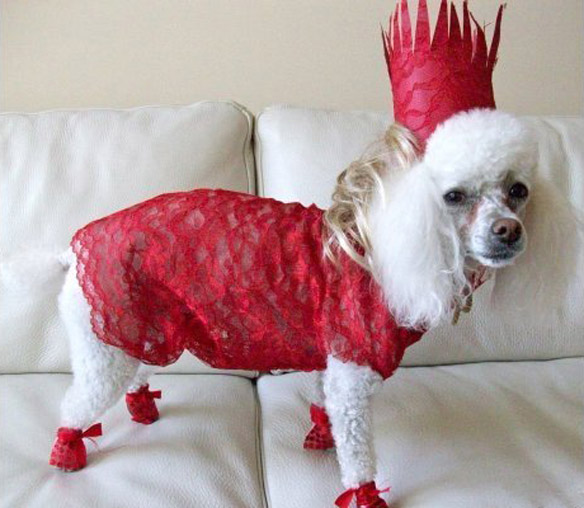 World's Strangest Halloween Costumes for Dogs!   BOLD and ...