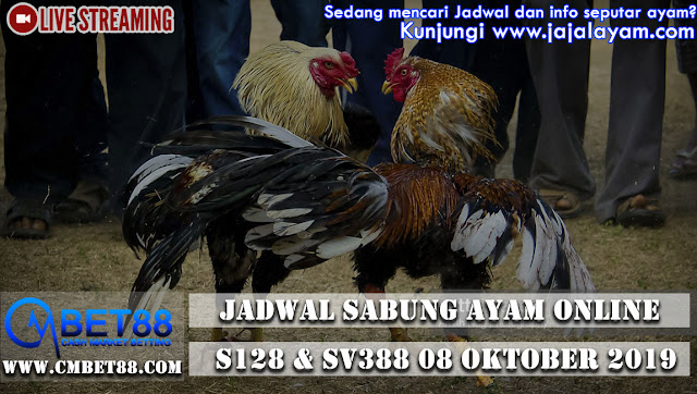 jadwal Sabung Ayam Online