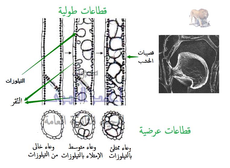 الوسائل المناعية التركيبية الناتجة كإستجابة للإصابة بالكائنات الممرضة ( تتكون بعد الإصابة ) ( المناعة المكتسبة )- التيلوزات