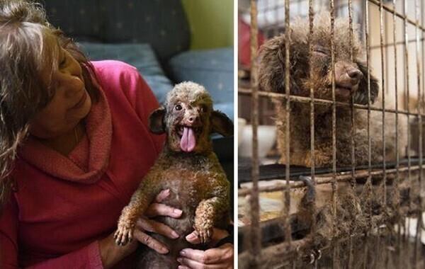 Собака всю жизнь просидела в подвале и теперь радуется жизни, что его выпустили
