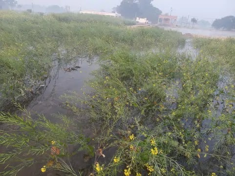 नहर का पानी एवं बरेजी पंप कैनाल के पानी से खेत जलमग्न, किसान परेशान