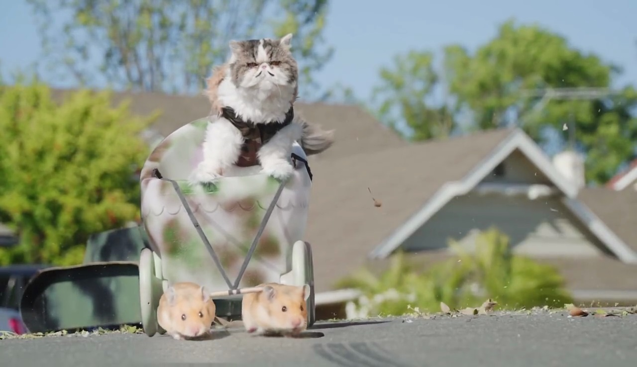 If Cats Ruled the World - Viral Video marketing