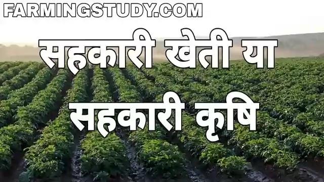 सहकारी खेती या सहकारी कृषि क्या है अर्थ एवं परिभाषा, sahkari kheti kya hai, sahkari krishi, सहकारी खेती के प्रकार, सहकारी खेती के लाभ एवं दोष लिखिए, co-operative farming in hindi