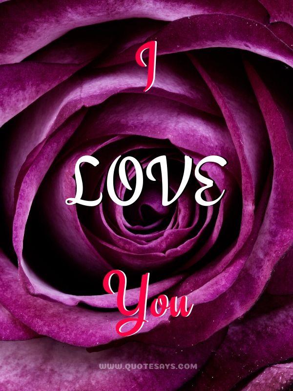 I Love You Pink Rose