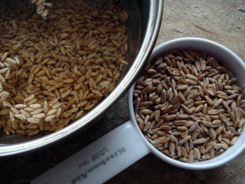 Prepare spelt wheat.