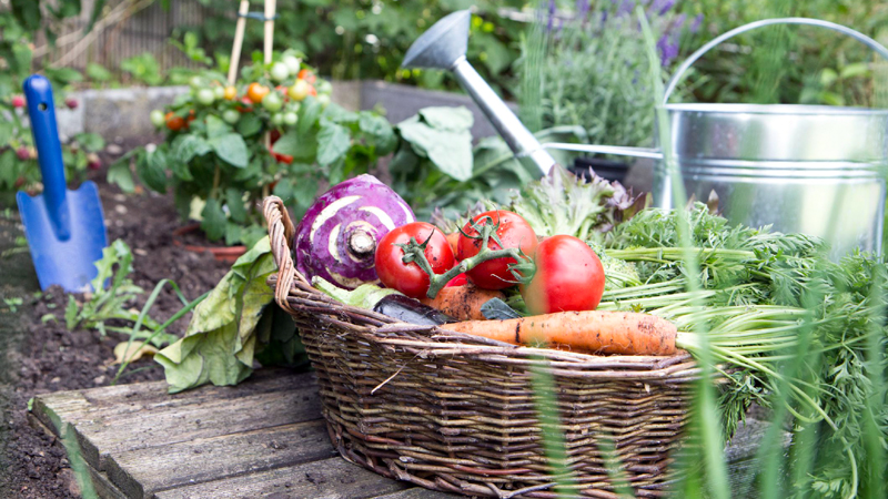 When to Plant These Popular Vegetables